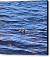 Canoeing Canvas Print by Viktor Savchenko