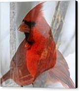 Cardinal Collage Canvas Print by Rick Rauzi