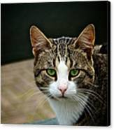 Cat Canvas Print by Odd Jeppesen