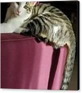 Cat On Sofa Canvas Print by Sami Sarkis