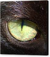 Cat's Eye Canvas Print by Shannon Blanchard
