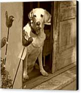 Charleston Shop Dog In Sepia Canvas Print by Suzanne Gaff
