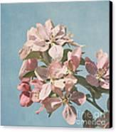 Cherry Blossoms Canvas Print by Kim Hojnacki