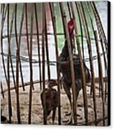 Chickens In Bamboo Cage Canvas Print by David Buffington