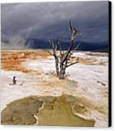 Clearing Storm At Mammoth Hot Springs Canvas Print by Photo by Mark Willocks