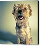 Cleveland Dog Canvas Print by Square Dog Photography