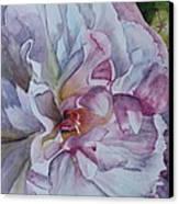 Close Focus Peony Canvas Print by Patsy Sharpe