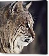 Close-up Of A Bobcat Felis Rufus Canvas Print by Dr. Maurice G. Hornocker