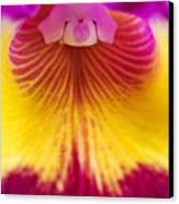 Close Up Of A Cattleya Orchid (cattleya Sp) Canvas Print by Mike Hill