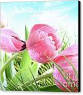 Close-up Of  Spring Tulips  Canvas Print by Sandra Cunningham