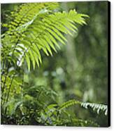 Close View Of Ferns In A Papua New Canvas Print by Klaus Nigge