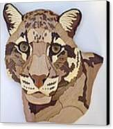 Clouded Leopard Canvas Print by Annja Starrett