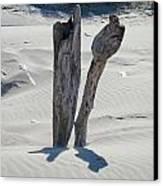 Coastal Driftwood Art Prints Ocean Shore Sand Beach Canvas Print by Baslee Troutman