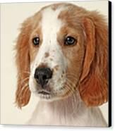 Cocker Spaniel Puppy Canvas Print by Retales Botijero