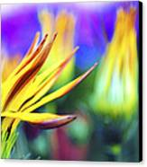 Colorful Flowers Canvas Print by Sumit Mehndiratta