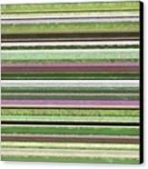 Comfortable Stripes Lv Canvas Print by Michelle Calkins