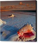 Conch Shell On Beach Canvas Print by Novastock and Photo Researchers