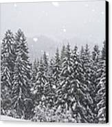 Coniferous Forest In Winter, Alps Canvas Print by Konrad Wothe