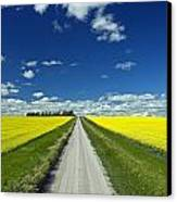 Country Road With Blooming Canola Canvas Print by Dave Reede