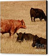 Cows Canvas Print by Methune Hively