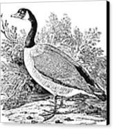 Cravat Goose Canvas Print by Granger