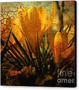 Crocus In Spring Bloom Canvas Print by Ann Powell