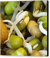 Cross Section Of Some Healthy Sprouts Canvas Print by Ashish Agarwal