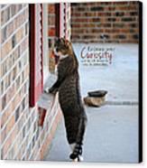 Curiosity Inspirational Cat Photograph Canvas Print by Jai Johnson