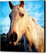 Curious Horse Canvas Print by Toni Hopper