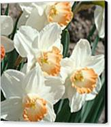 Daffodil Flowers Art Prints Spring Floral Canvas Print by Baslee Troutman