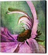 Daisy Fun - A01v042t05 Canvas Print by Variance Collections