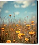 Daisy Meadow Canvas Print by Boston Thek Imagery