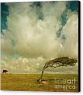 Daisy Spots A Tree Canvas Print by Paul Grand