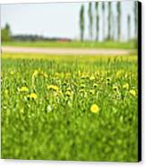 Dandelions Growing In Meadow Canvas Print by Stock4b-rf