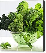 Dark Green Leafy Vegetables In Colander Canvas Print by Elena Elisseeva