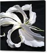 Deconstructed Lily Canvas Print by Anna Villarreal Garbis