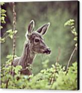 Deer In Forest Canvas Print by Christopher Kimmel