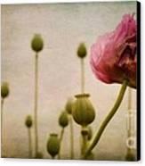 Depth Of Poppy Field Canvas Print by Priska Wettstein