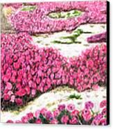 Desert Flowers Canvas Print by Glenda Zuckerman
