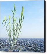 Desert Plant, Artwork Canvas Print by Carl Goodman