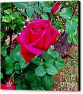Dew Kissed Red  Rose Canvas Print by The Kepharts