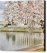 Digital Liquid - Cherry Blossoms Washington Dc 6 Canvas Print by Metro DC Photography