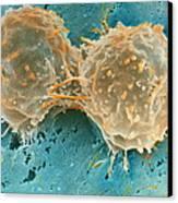 Dividing Cells Canvas Print by Professor P. Motta & D. Palermo
