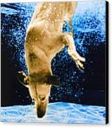 Diving Dog 3 Canvas Print by Jill Reger