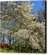 Dogwood Grove Canvas Print by Debra and Dave Vanderlaan