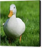 Duck On Grass Canvas Print by Mats Silvan