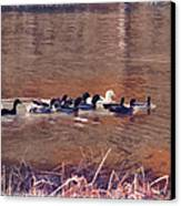Ducks On Canvas Canvas Print by Douglas Barnard