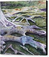Dunbar Cave Roots  Canvas Print by Patsy Sharpe