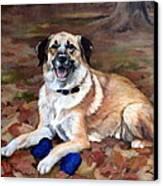 Dutch Shepherd Canvas Print by Sandra Chase