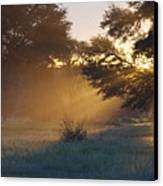 Early Morning Sun Beams Through Branches Of A Tree Canvas Print by Heinrich van den Berg